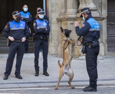 perros-policia